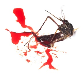 Mosquito Herido en Guerra